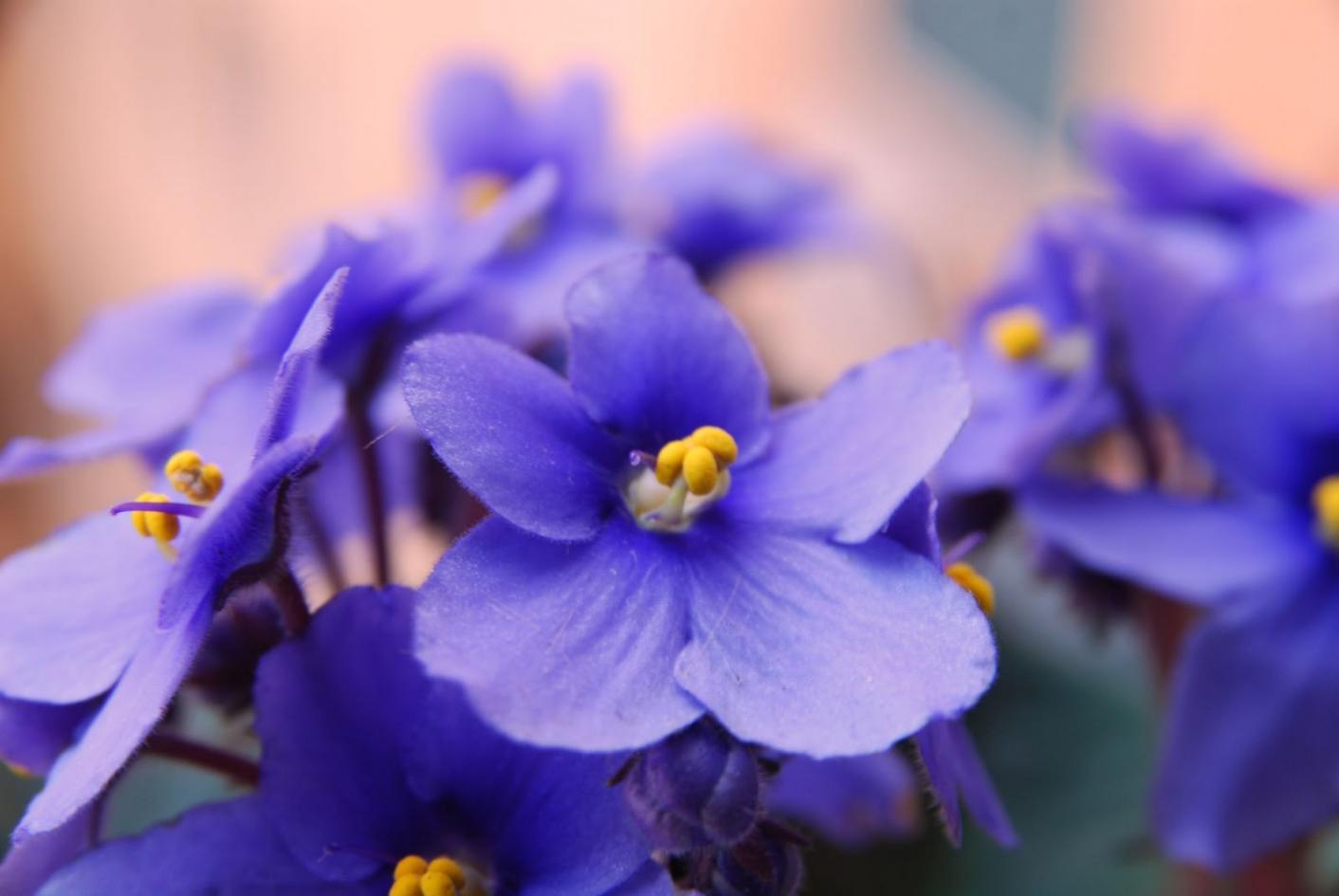 Nome:   violetta.jpg Visite:  146 Grandezza:  77.6 KB