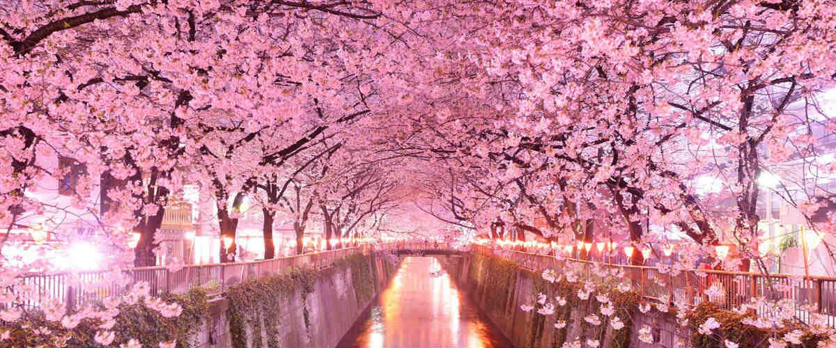 Nome:   hanami-giappone-luoghi-sakura.jpg Visite:  179 Grandezza:  95.4 KB