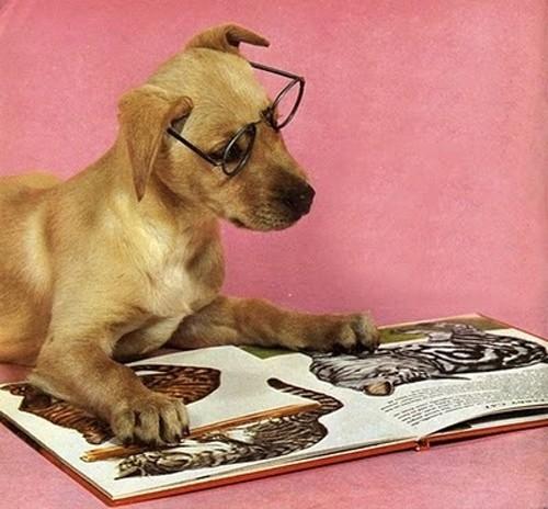 Nome:   cane-legge-gatti.jpg Visite:  276 Grandezza:  66.6 KB