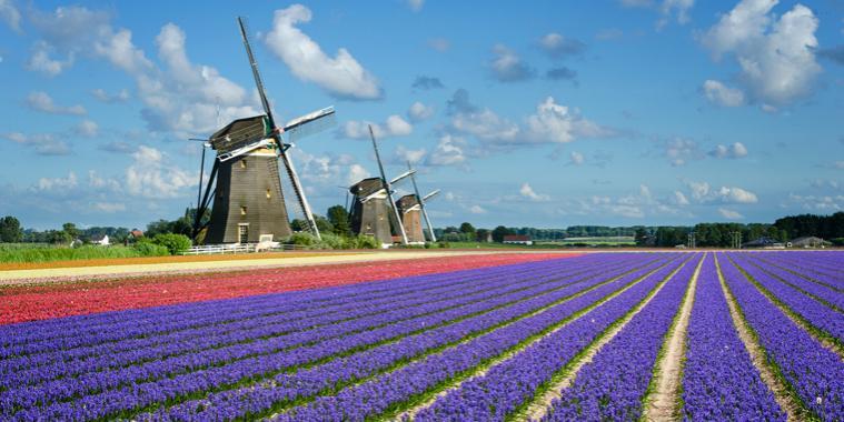 Nome:   holland760x480.jpg Visite:  422 Grandezza:  56.0 KB