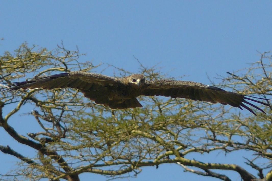 Nome:   11-serengeti (43).jpg Visite:  187 Grandezza:  92.8 KB