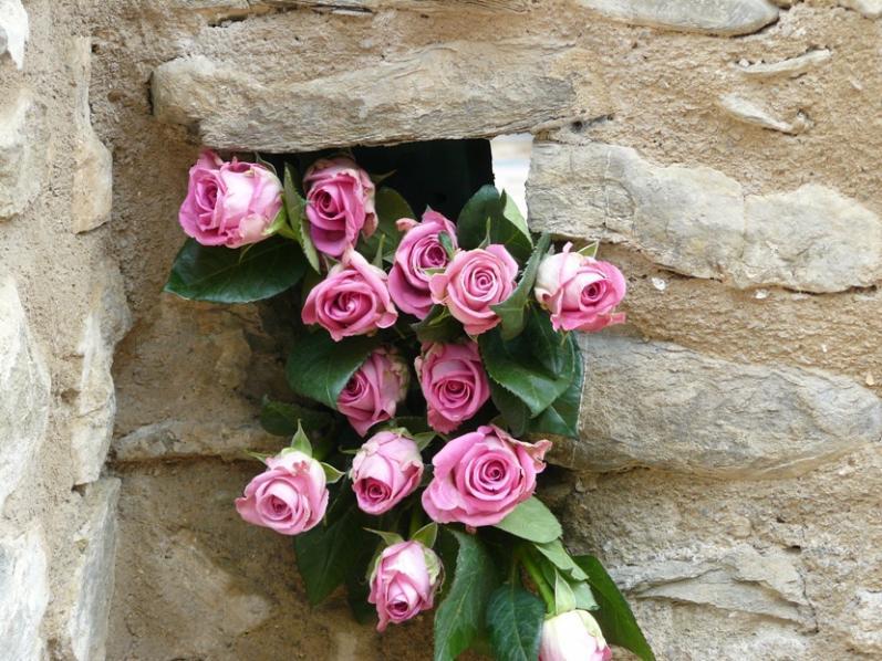 Nome:   P1020567 rose ridotte.jpg Visite:  1242 Grandezza:  98.4 KB