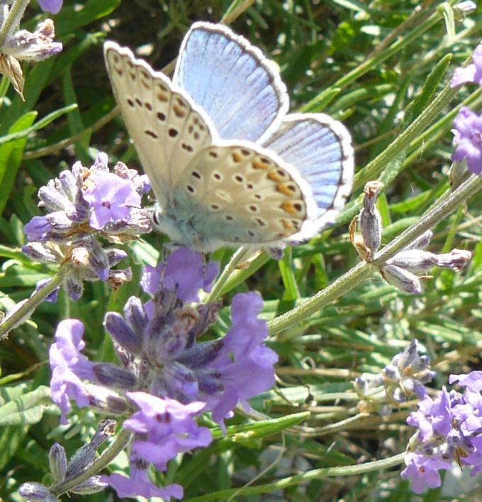 Nome:   farfalla.jpg Visite:  148 Grandezza:  93.6 KB