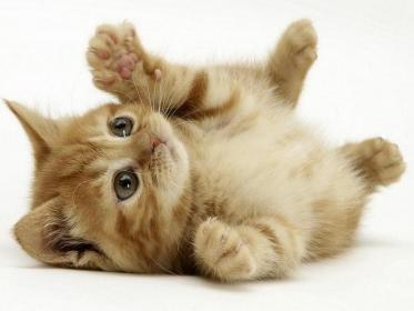 Nome:   gatto-1024x768.jpg Visite:  63 Grandezza:  12.6 KB