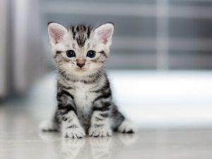 Nome:   gatto-min-300x226.jpg Visite:  72 Grandezza:  9.0 KB