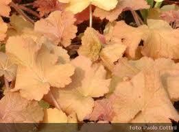 Nome:   foglie caduche.jpg Visite:  436 Grandezza:  8.1 KB