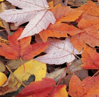 Nome:   foglie morte.jpg Visite:  349 Grandezza:  22.0 KB