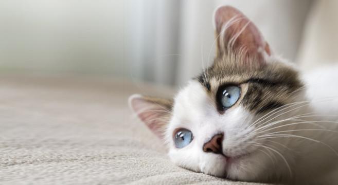 Nome:   gatto-657x360.jpg Visite:  91 Grandezza:  46.6 KB