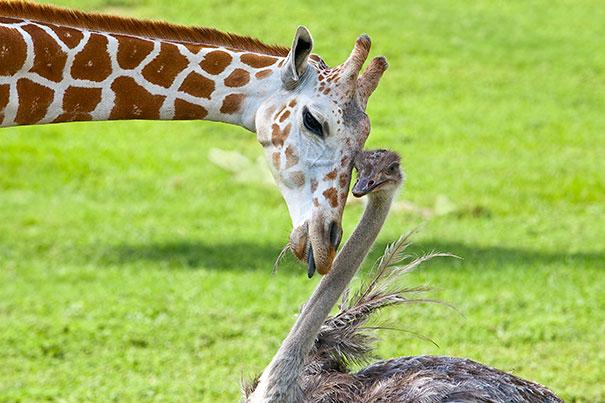 Nome:   unusual-animal-friendship-10-1.jpg Visite:  79 Grandezza:  70.8 KB