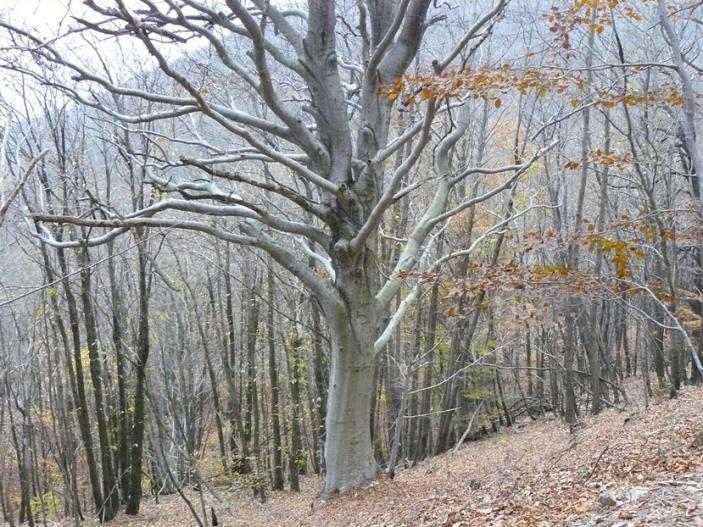Nome:   P1230244 albero autunnale.jpg Visite:  75 Grandezza:  101.9 KB