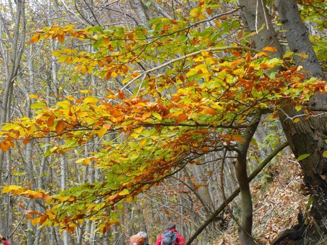 Nome:   P1230258 foglie gialle.jpg Visite:  76 Grandezza:  104.8 KB