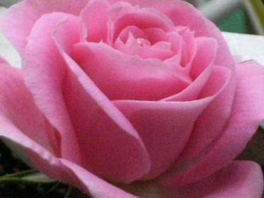 Nome:   amor-rosas-L-Eubs5t.jpg Visite:  52 Grandezza:  13.5 KB