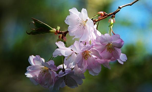 Nome:   equinozio-di-primavera-2015_248295.jpg Visite:  41 Grandezza:  87.3 KB