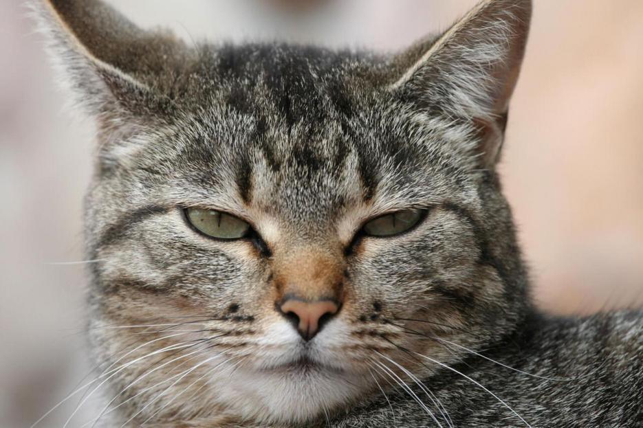 Nome:   gatto-comunica-coda.jpg Visite:  67 Grandezza:  97.2 KB