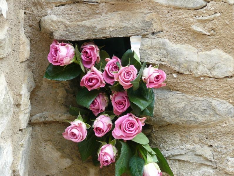 Nome:   P1020567 rose ridotte.jpg Visite:  1500 Grandezza:  98.4 KB