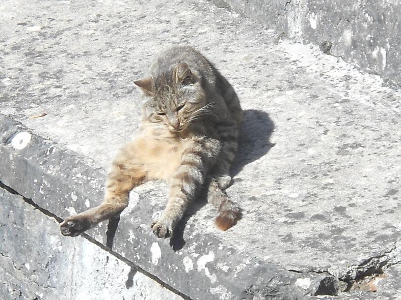 Nome:   gatto a porretta2.jpg Visite:  20 Grandezza:  99.5 KB